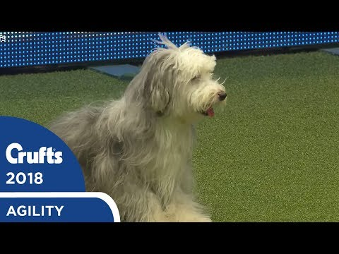 Agility - Crufts Singles Heat S/M/L (Jumping) Part 3 | Crufts 2018