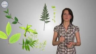 Биология 6 Строение растительного  организма
