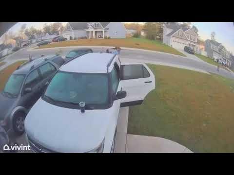 Bobcat-Attacks-Wife-Husband-Throws-Bobcat-Across-Yard-From-Tik-Tok
