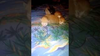 На во рождённые котята