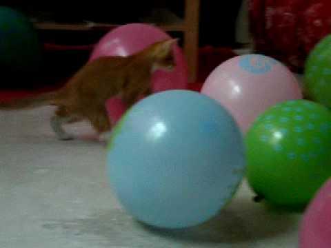 kitten vs. balloons