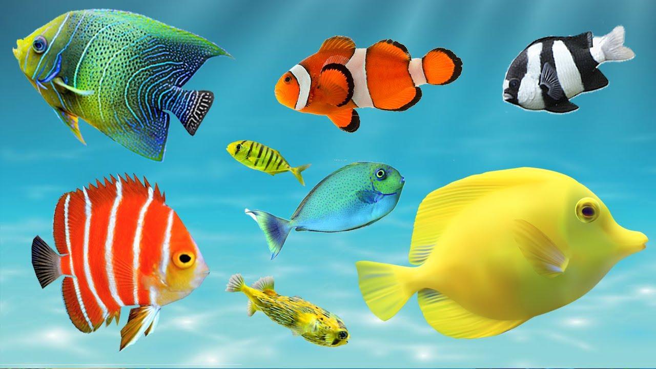 Peixes Coloridos de Aquário,  Som dos peixes do Oceano,  Som do Fundo do Mar