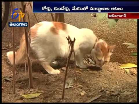 Administering Rare Cat Breeds | A Pet Lover's Effort | Adilabad District | A Story
