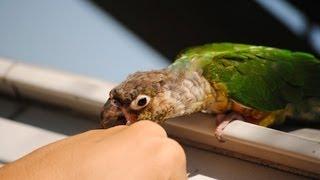 What to Do If a Bird Bites You | Pet Bird
