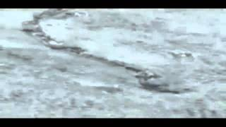 AMAZING The Iceland Worm Monster ( Lagarfljóts Worm ) Nessie  06.02.2012.mp4.flv