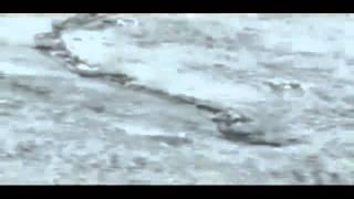 AMAZING The Iceland Worm Monster ( Lagarfljóts Worm ) Nessie  06.02.2012.mp4.flv