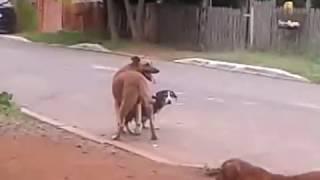 cachorro fazendo sexo na rua ushsuhsuhsushuhs *-*