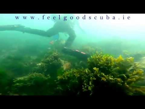 Scuba Diving in Ireland - Diving with Seals