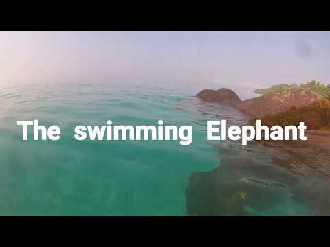 The swimming Elephant - a tale of andaman