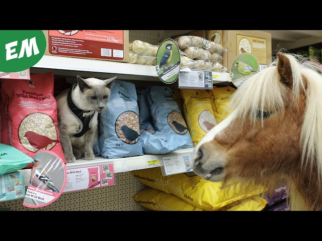 Louis and Albert go shopping in Store!