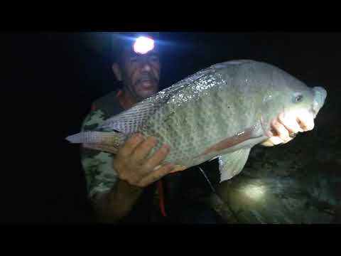 Aventura de pesca de noche pesca con chuy