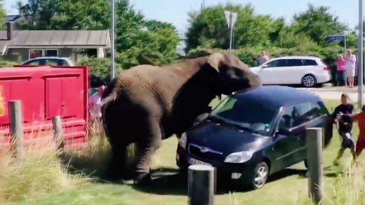 لهذا لا يمكنك إغضاب الحيوانات البرية