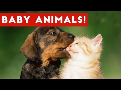 The Cutest Baby Puppies & Kittens Weekly Compilation 2017 | Funny Pet Videos