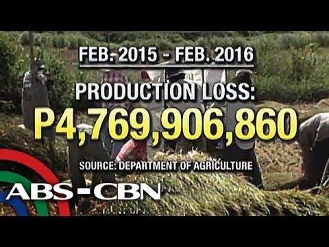 Bandila: Climate change threatens PH food security