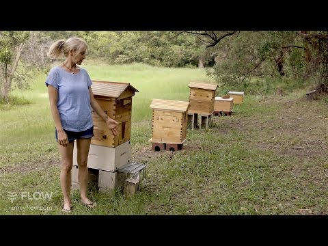 Beginner Beekeeping Ep 1 – The difference between a Flow™ Hive and a Langstroth hive