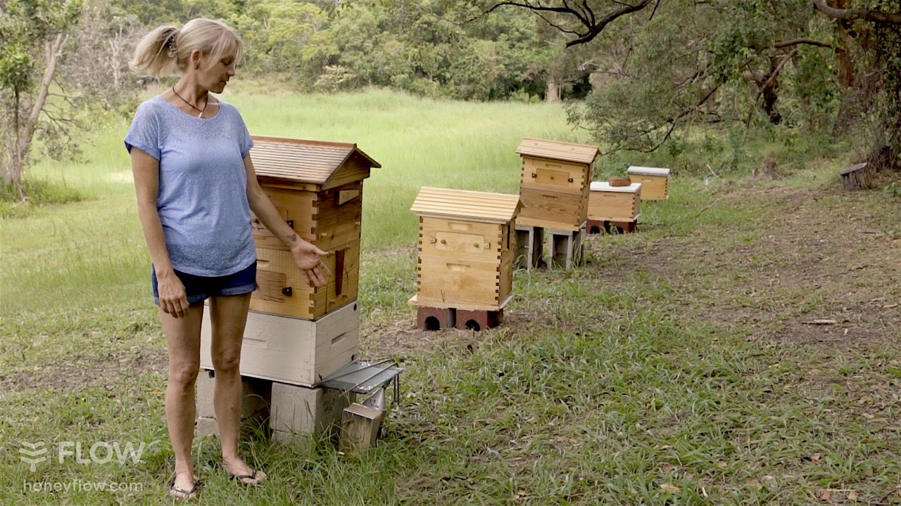 beginner beekeeping ep 1 the difference between a flo doovi. Black Bedroom Furniture Sets. Home Design Ideas