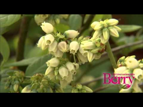 The Berry Family Of Nurseries Mp4