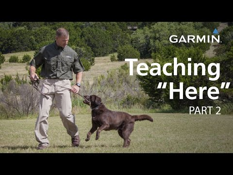 e-Collar Training with Garmin: Teaching Here or Come, Part 2