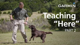 "e-Collar Training with Garmin: Teaching ""Here"" or ""Come,"" Part 2"