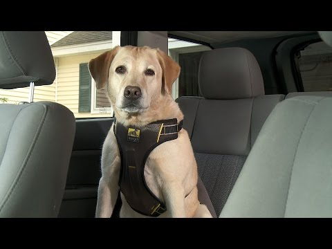 Kurgo Impact Dog Car Harness You