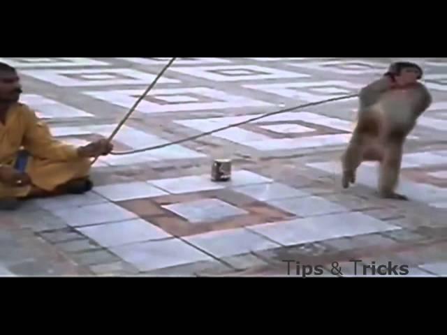 افضل مقاطع مضحكة للقرود : most funnist monkey