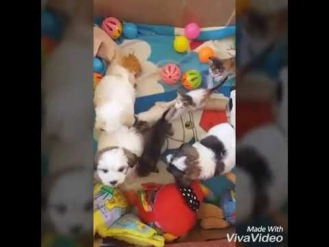 My playful pups and kittens playing together.