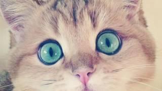 Фото милых кошек )