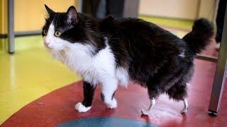 Bulgaria's First Ever Bionic Cat