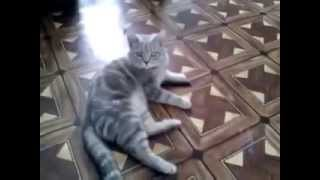 Кот учится писать
