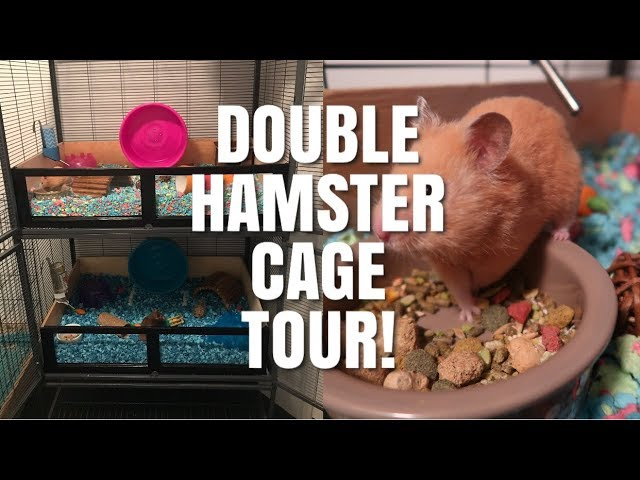 hamster-cage-tours-critter-nation-hamster-cages