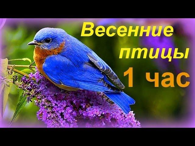 Весенние птицы / Birds Singing Relax