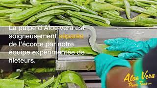 #1 Aloe Vera Pour Tous | Savoir faire Forever Living | La récolte de l'aloe vera