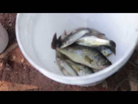 Lake Hartwell Fishing Anderson SC Highway 24