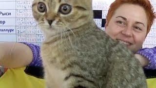 Кошка за 100000 рублей!