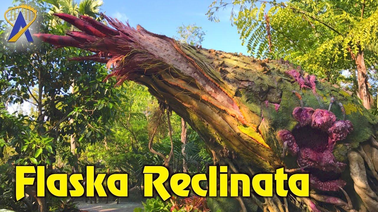 Flaska Reclinata Interactive Plant Inside Pandora