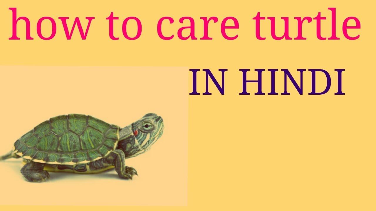 tortoise in hindi language
