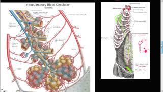 #59P - Bronchial artery collateral circulation, Anastomosis, Cor Pulmonale, SIEA, Respiratory tree
