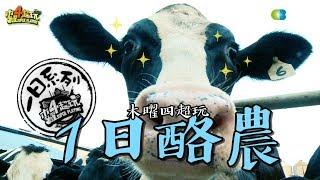 《一日系列第七十一集》邰哥帶著泱泱去農場擠ㄋㄟㄋㄟ!!-一日酪農