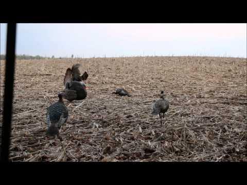 TURKEY HUNTER..2015 Ontario Turkey hunting..Crossbow...