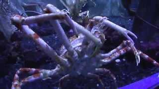 Аквариум Дубай Молл(Дубай Молл- самый большой торгово-развлекательный центр в мире (ОАЭ). Есть там огромный аквариум Дубай..., 2015-04-30T18:49:12.000Z)