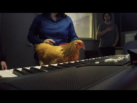 Jokgu The Chicken Plays The Piano In Studio