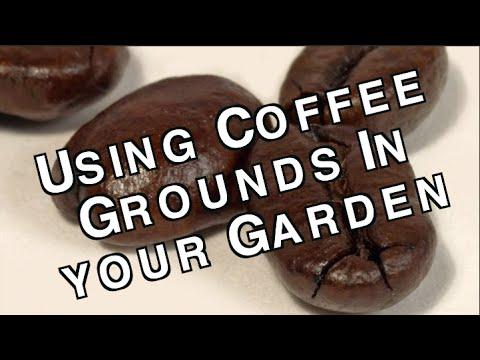 Used coffee grounds how to use them to enhance and fertilize your garden soil for free youtube for How to use coffee grounds in garden