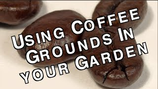 Used Coffee Grounds How To Use Them To Enhance And Fertilize Your Garden Soil For Free