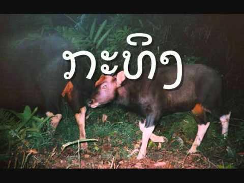 ສັດປ່າຢູ່ລາວ wild animals in laos.wmv