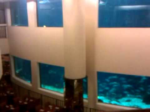 Oceanarium Waikiki S Pacific Beach Hotel
