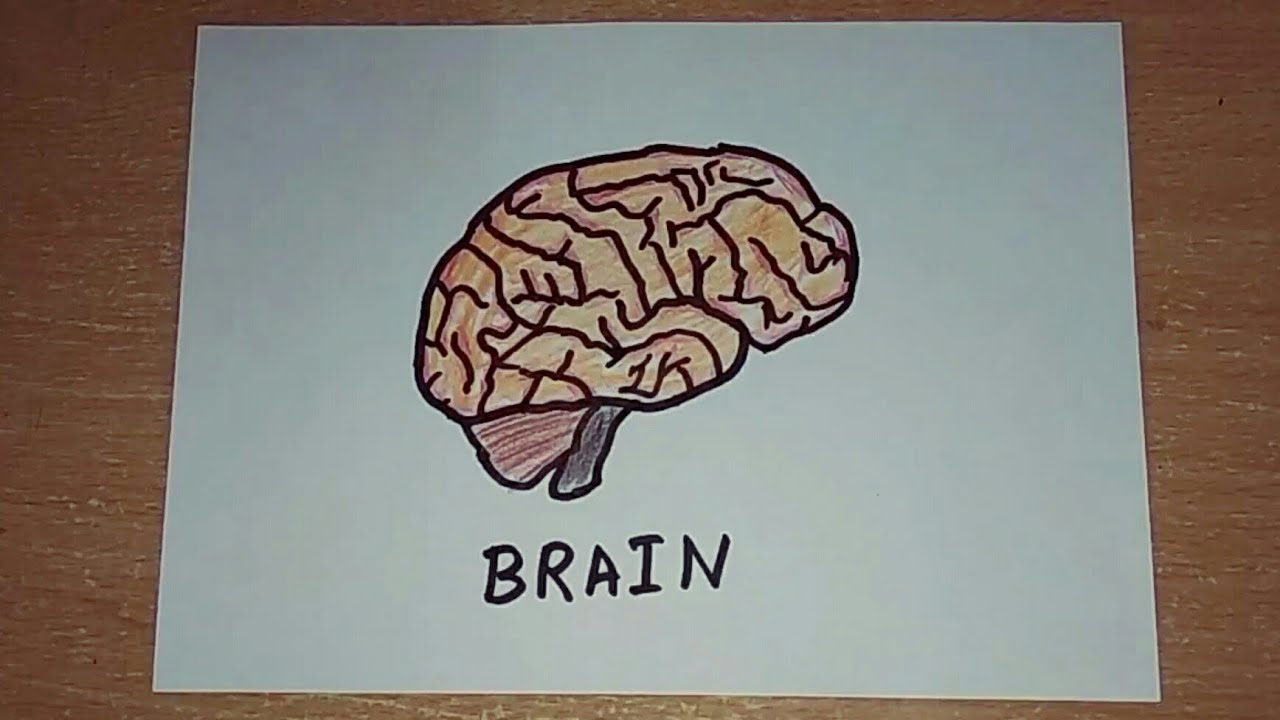 How to draw a brain | Human Organs Drawing | Easy Step by ...