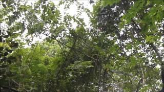 Osa Peninsula, Costa Rica: Wildlife