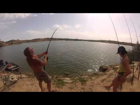 Giant Catfish At Ebro Spain Grote Meerval Ebro