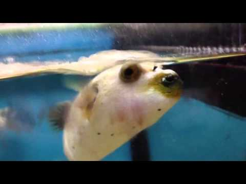 Deep Sea Creatures That Look Like ALIENS from YouTube · Duration:  10 minutes 11 seconds  · 37,000+ views · uploaded on 8/14/2017 · uploaded by Talltanic