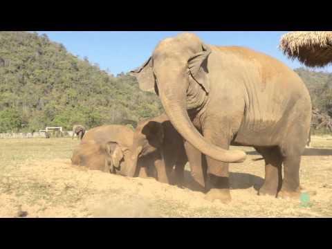 Elephant Fart